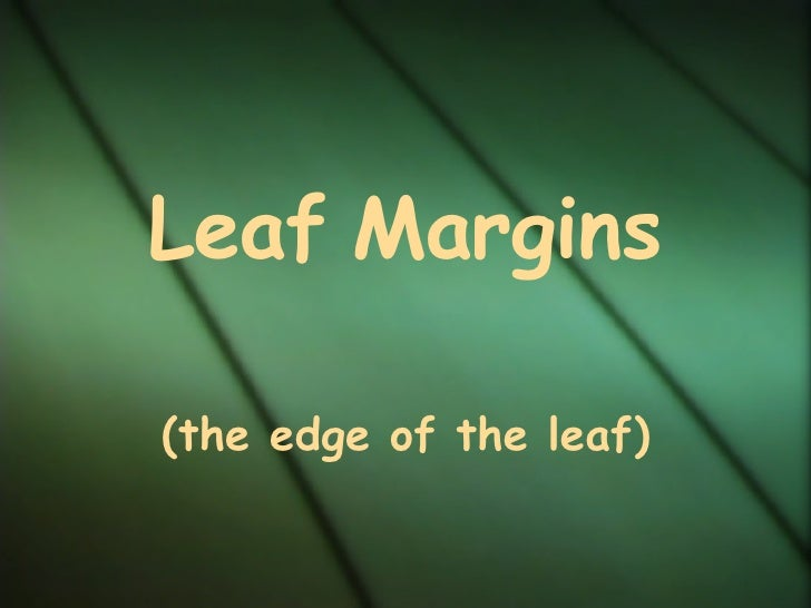 Leaf   Margins (the edge of the leaf)