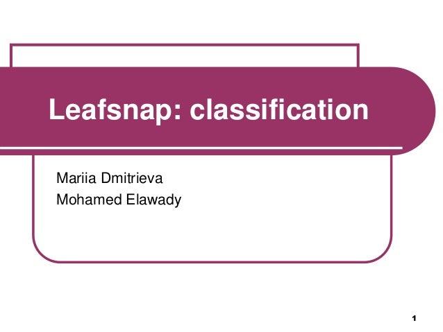 1 Leafsnap: classification Mariia Dmitrieva Mohamed Elawady
