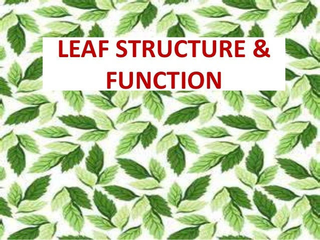 LEAF STRUCTURE &  FUNCTION