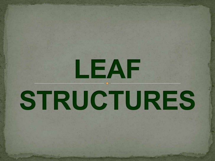  A leaf is an organ of a vascular plant, as defined in botanical terms, and  in particular in plant morphology. Foliage i...