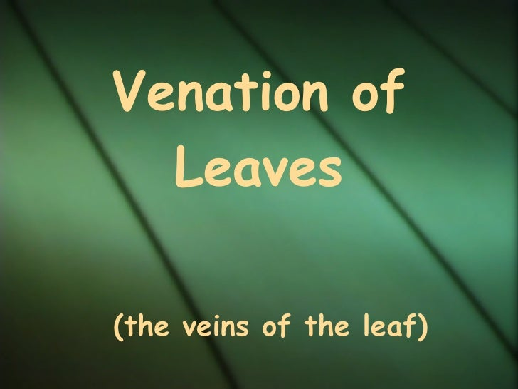 Venation of   Leaves   (the veins of the leaf)
