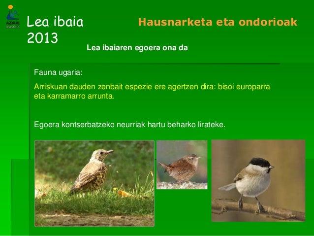 Lea ibaia2013Hausnarketa eta ondorioakLea ibaiaren egoera ona daFauna ugaria:Arriskuan dauden zenbait espezie ere agertzen...