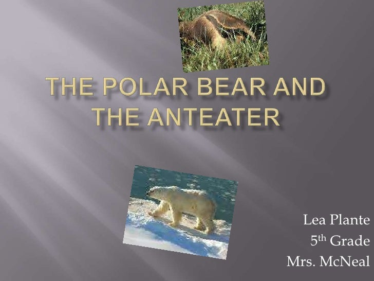 The Polar Bear and the Anteater<br />Lea Plante <br />5th Grade<br />Mrs. McNeal<br />