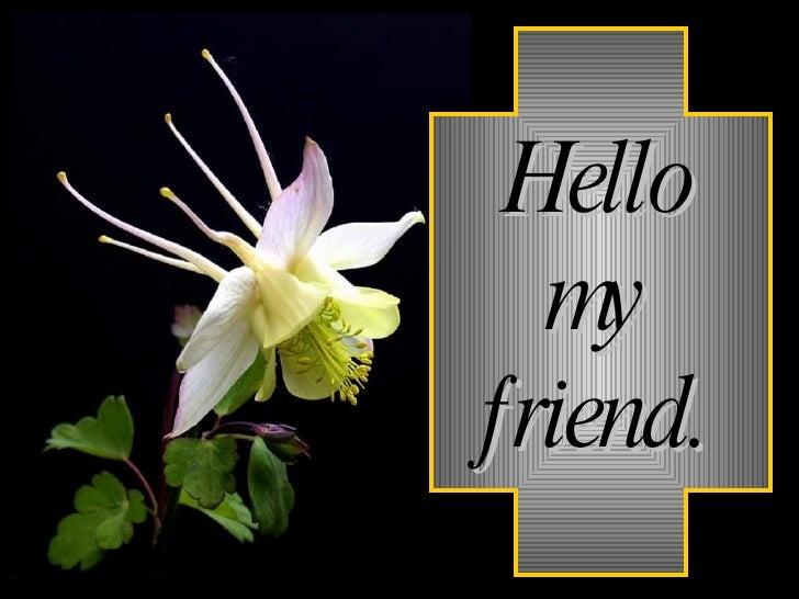 Hello my friend.