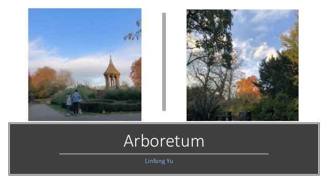 Arboretum Linfang Yu