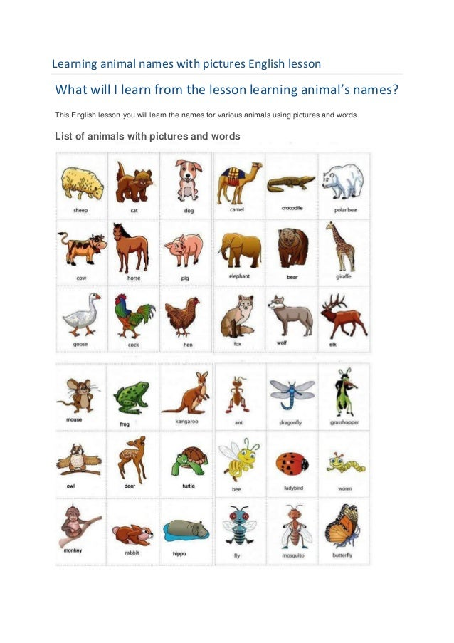 Learning animal names with pictures English lessonWhat will I learn from the lesson learning animal's names?This English l...