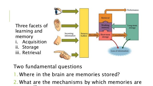 memory storage in the brain Memory is the ability of the mind to store and recall information that was previously acquired memory is processed through three fundamental processing stages: storage, encoding, and retrievalstoring refers to the process of placing newly acquired information into memory, which is modified in the brain for easier storage.