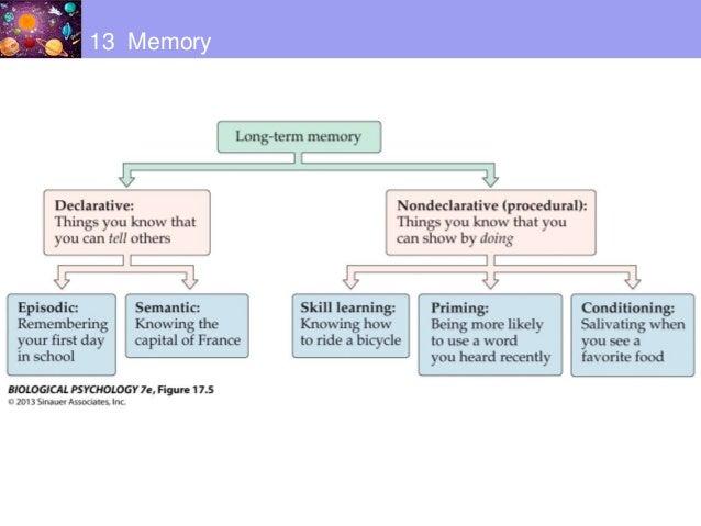 Psychology: Biological Basis of Psychology Flashcards ...