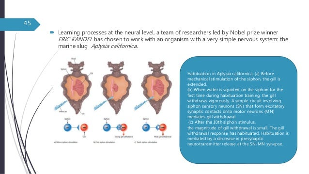 Sensory Stimulation Theory Essay Sample