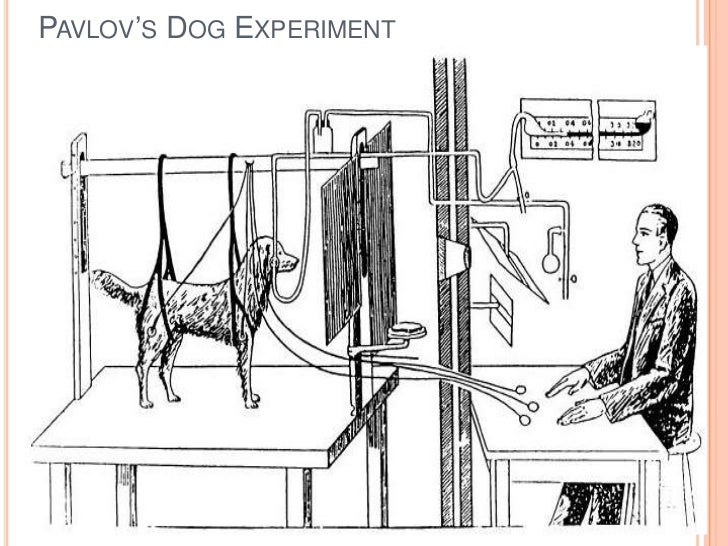 Conditioned Stimulus In Pavlov S Dog Experiment