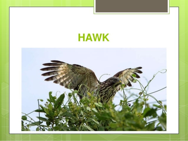 Learn names of birds in english