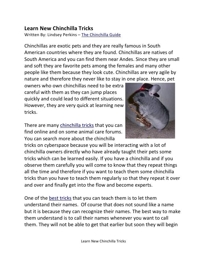 Learn New Chinchilla Tricks Written By: Lindsey Perkins – The Chinchilla Guide  Chinchillas are exotic pets and they are r...