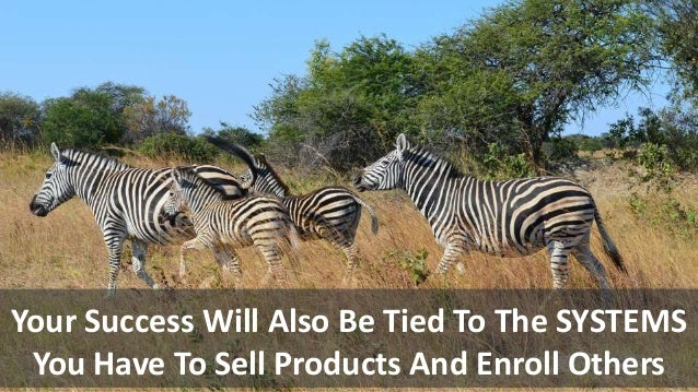 Your Success Will Also Be Tied To The SYSTEMS You Have To Sell Products And Enroll Others