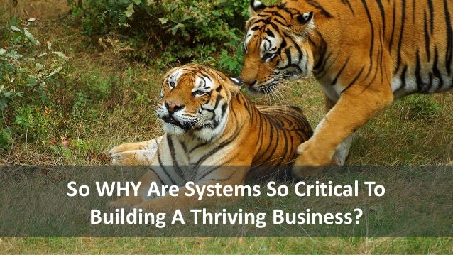 So WHY Are Systems So Critical To Building A Thriving Business?