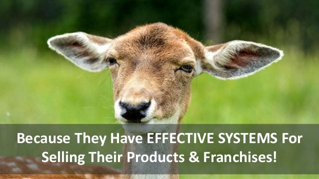Because They Have EFFECTIVE SYSTEMS For Selling Their Products & Franchises!
