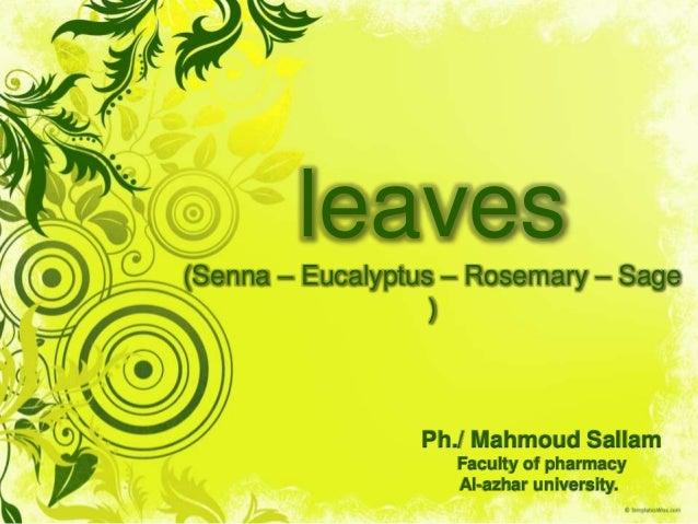 leaves (Senna – Eucalyptus – Rosemary – Sage ) Ph./ Mahmoud Sallam Faculty of pharmacy Al-azhar university.
