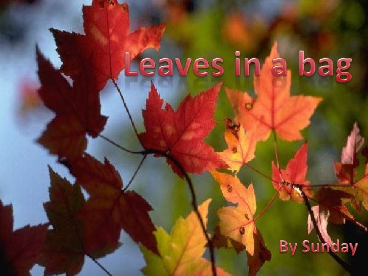 Leaves in a bag<br />      By Sunday<br />
