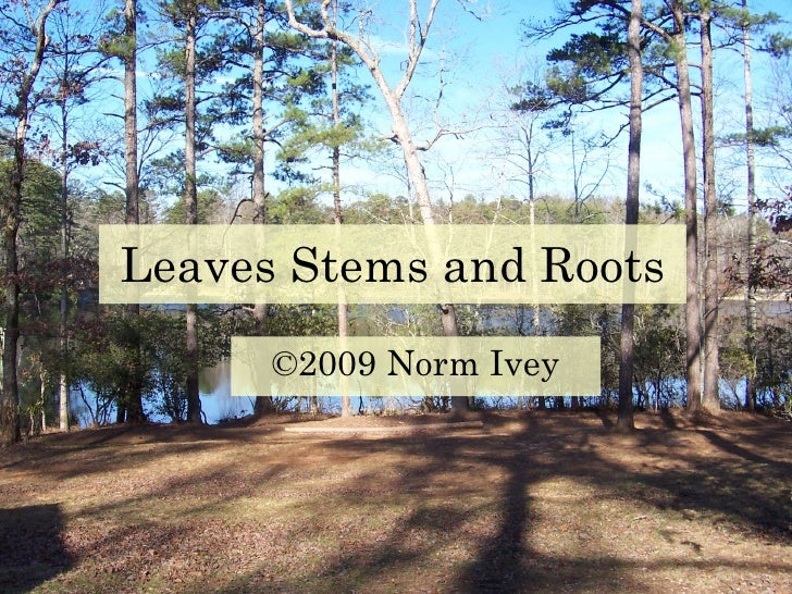 Leaves Stems and Roots ©2009 Norm Ivey