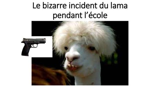 Le bizarre incident du lama pendant l'école