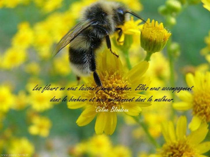 """Belles photos sur la nature - citations sur le """"Bonheur"""""""