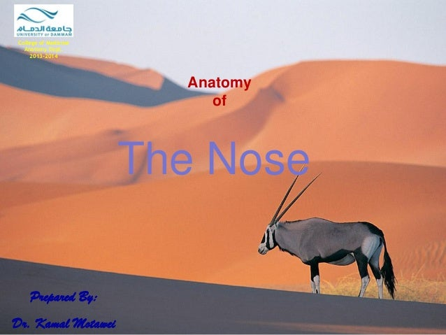 Anatomy of  The Nose  Prepared By: Dr. Kamal Motawei  College of Medicine  Anatomy Dept.  2013-2014