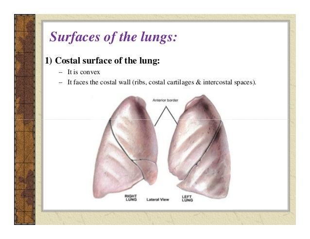 Lec 8 Lungs Pt Amp Rc