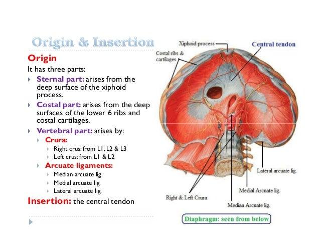 Lec9 Diaphragm Ptrt