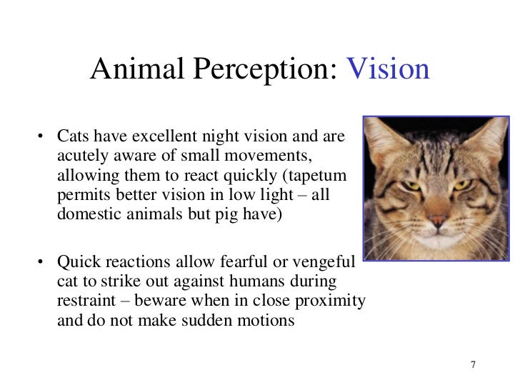 Do Dogs Or Cats Have Better Vision