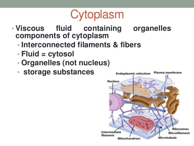 A carbohydrate that is composed of numerous sugar molecules is called