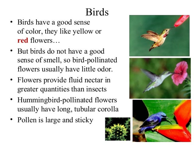 Can Birds Smell Bird Food