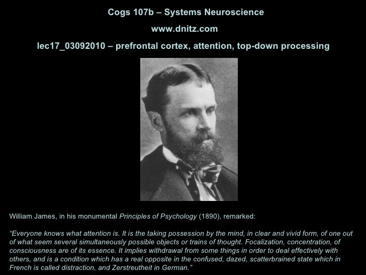 Cogs 107b – Systems Neuroscience www.dnitz.com lec17_03092010 – prefrontal cortex, attention, top-down processing  William...