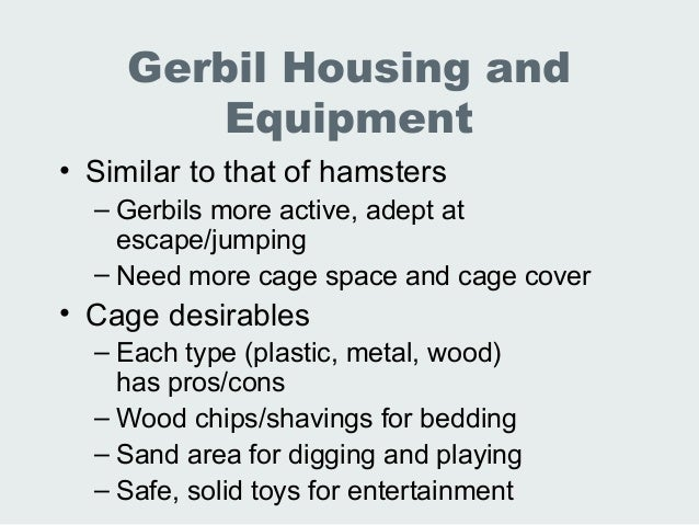 Lec lab animal hamsters gerbils ferrets chinchillas