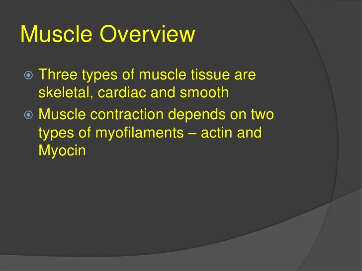 Muscle Overview<br />Three types of muscle tissue are skeletal, cardiac and smooth<br />Muscle contraction depends on two ...