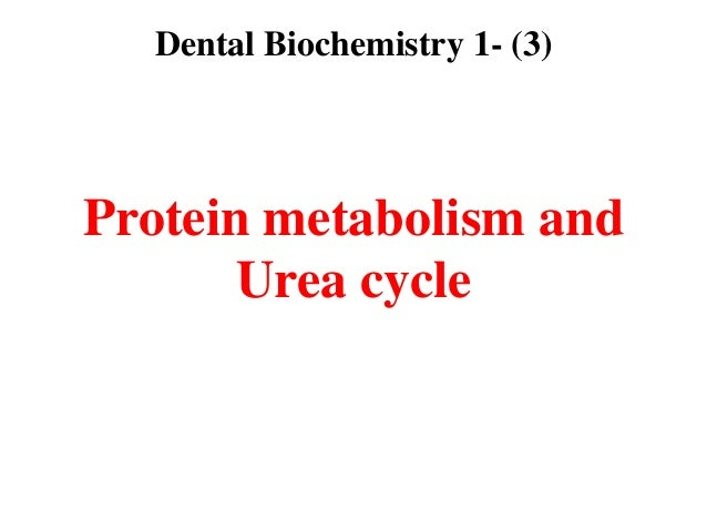 Dental Biochemistry 1- (3)Protein metabolism and       Urea cycle