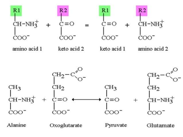 non liver toxic anabolic steroids