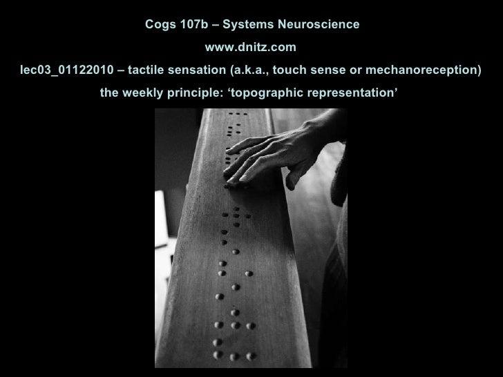 Cogs 107b – Systems Neuroscience www.dnitz.com lec03_01122010 – tactile sensation (a.k.a., touch sense or mechanoreception...