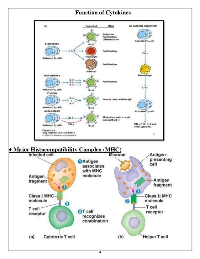 Cytokines and HYPERSENSITIVITY and Disorder of Human Immunity