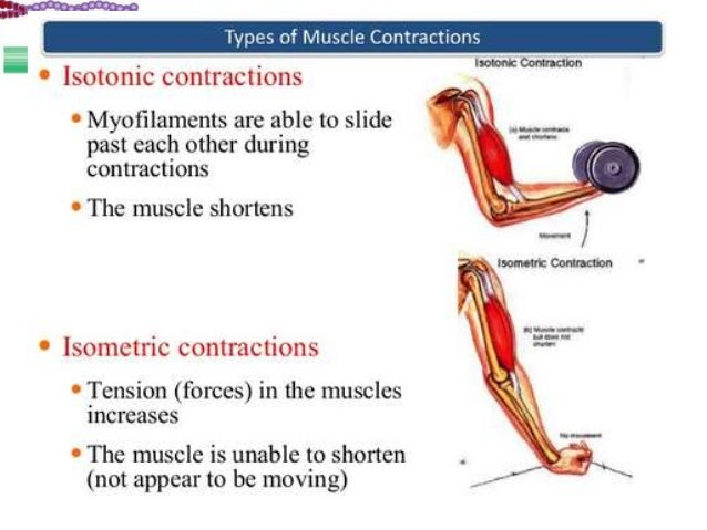 Lec 5. charecteristic of whole muscle contraction