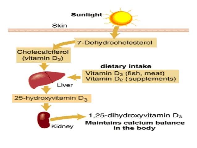Lec 5, 6 level 4-de (fat soluble vitamins)