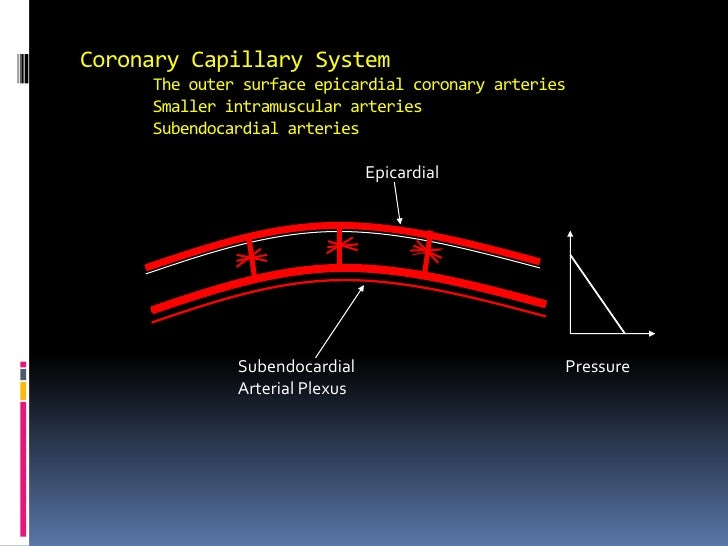 Coronary Capillary SystemThe outer surface epicardial coronary arteriesSmaller intramuscular arteriesSubendocardial art...