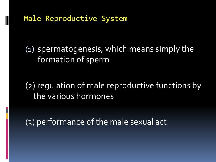 Male Reproductive System<br />spermatogenesis, which means simply the formation of sperm<br />(2) regulation of male repro...