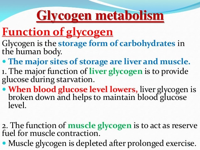 muscle glycogen resynthesis after Glycogen replenishment glycogen, which is stored in the muscles, is the fuel source athletes must restore following strenuous training muscle glycogen is the predominant fuel source used during long bouts of aerobic exercise in fact, aerobic performance is directly related to initial glycogen stores.