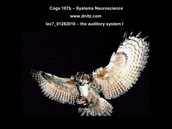 Cogs 107b – Systems Neuroscience www.dnitz.com lec7_01282010 – the auditory system I