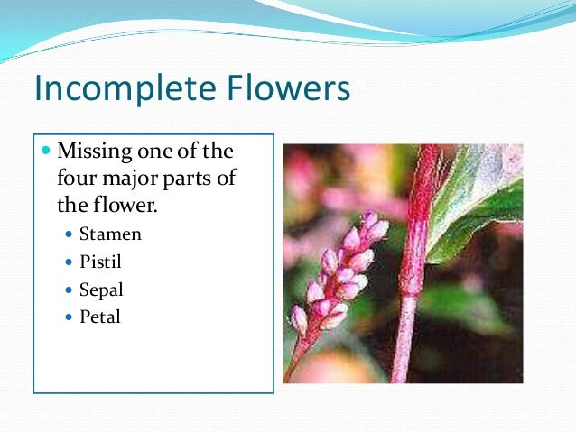 Incomplete flowers are generally unisexual plant