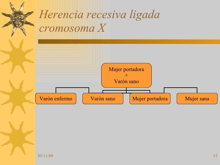 Herencia recesiva ligada cromosoma X Mujer portadora + Varón sano Varón enfermo Varón sano Mujer portadora Mujer sana