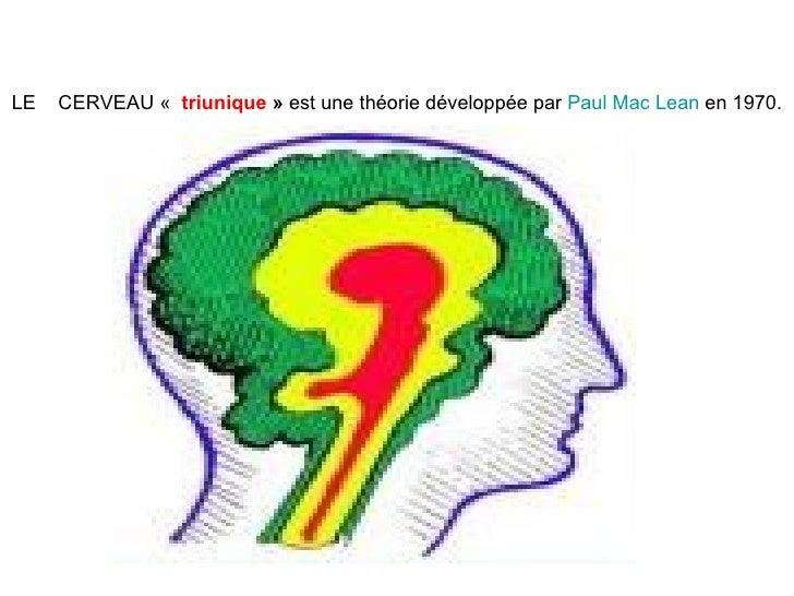 LE  CERVEAU  «   triunique »  est une théorie développée par  Paul Mac Lean  en 1970.