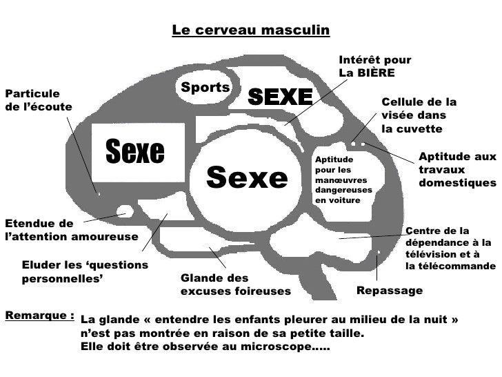 Le cerveau masculin Sports SEXE Intérêt pour  La BIÈRE Cellule de la visée dans la cuvette Aptitude aux travaux domestique...