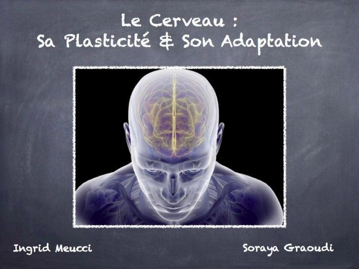 Le Cerveau : sa Plasticité & son Adaptation