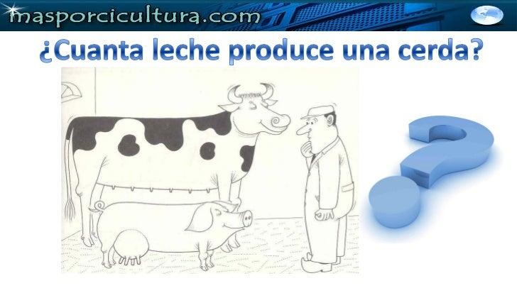 ¿Cómo se que mis cerdas están produciendo unabuena cantidad de leche? •Por el peso de la camada al            destete