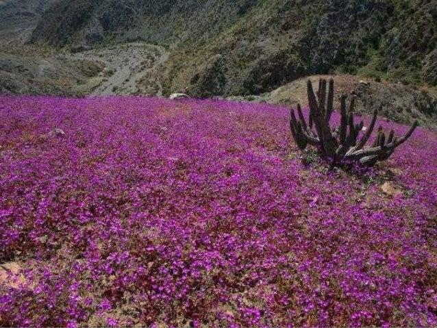 Images : du Net Cusco - AndesCusco - Andes Retour bureau